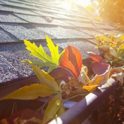 leaf in roof's gutter