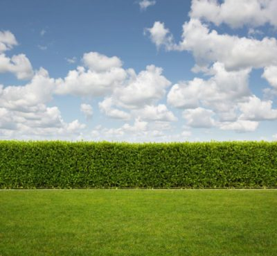Clouded blue sky with green grass